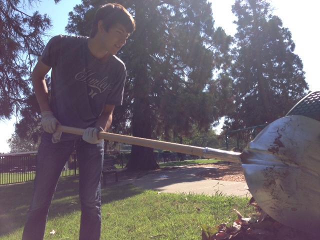 Joseph Kiefer shovels raked leaves onto a tarp on Sept. 14. Photo by KAVLEEN SINGH