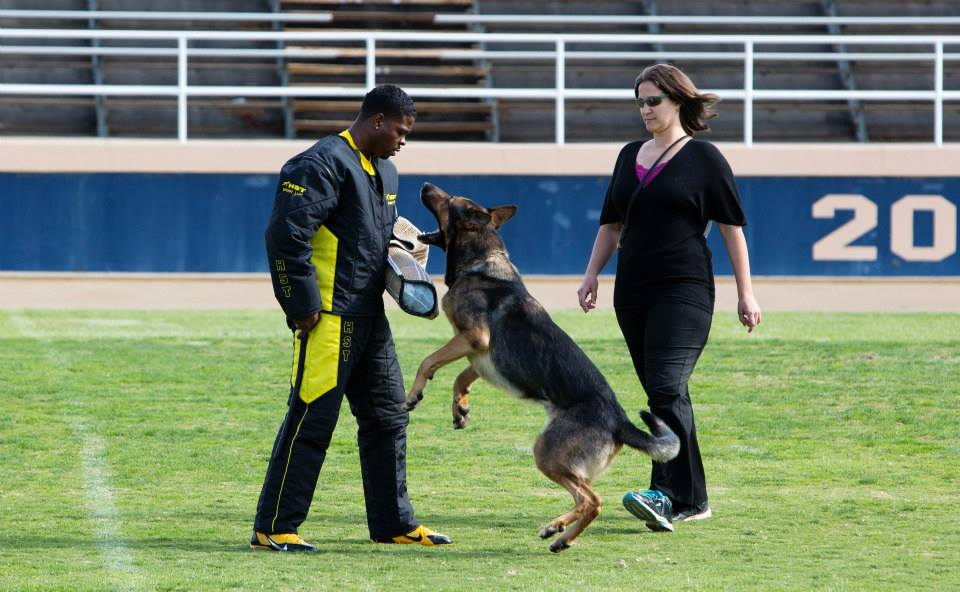 Ms. Kuehn and her dog Axel compete in the Protection phase of the Competition