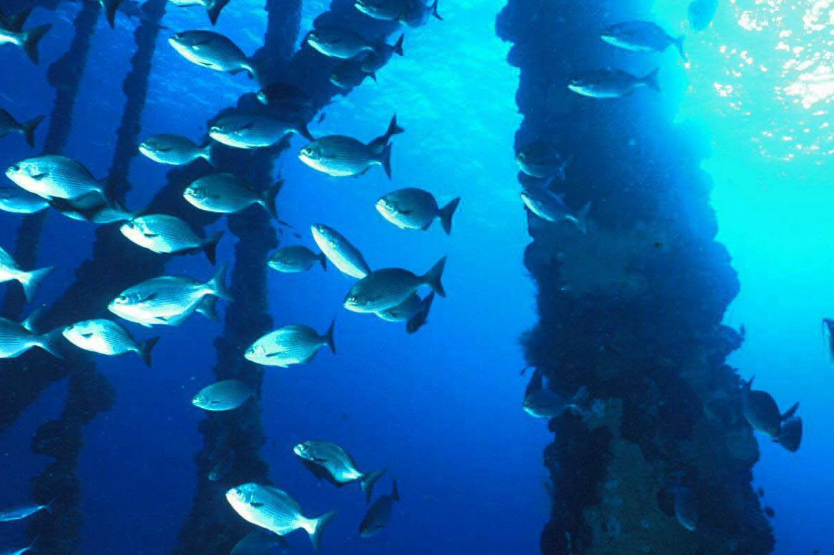 The debated rigs to reefs policy ensures safety of marine for Fish on energy