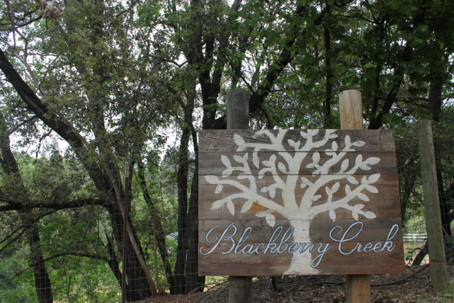 A WARM WELCOME. Blackberry Creek Animal Sanctuary is located in Colfax, California. You may have to take a few winding roads to get there, but when you do, you are greeted with sign and many loving animals.