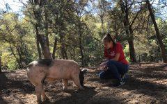 Blackberry Creek creates opportunities to help animals