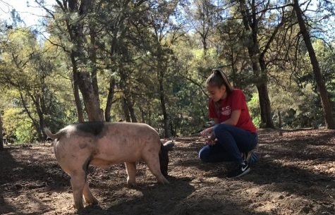 While volunteering at Blackberry Creek, Sophia Perkins kneels down in the dirt to hang out beside one of the pigs at the farm. Photo by Paige Alcala.